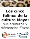 Felines-mayan-culture-differences-attributes-Nicholas-Hellmuth