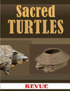 Sacred turtles in Mayan art and iconography Revue Magazine Guatemala August 2011