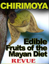 Edible Fruits of the Mayan Diet, Chirimoya. Annonna squamosa, sugar apple, sweetstop