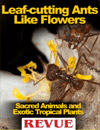 Leaf-cutting Ants Like Flowers, REVUE Magazine article
