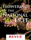 Flowering of the National Tree