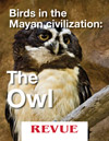 Birds in the Mayan civilization: The Owl. Article for REVUE by Nicholas Hellmuth