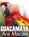 Guacamaya, Ara Macao