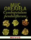Cymbopetalum penduliflorum Muc Orejuela