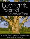 Economic potential for Amate Ficus trees in Guatemala