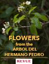 Flowers from Hermano Pedro Tree Arbol REVUE article FLAAR Nicholas Hellmuth