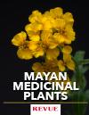 Pericon Mayan medicinal plants REVUE article FLAAR Nicholas Hellmuth