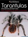 Tarantulas Guatemala need protection FLAAR Report Nicholas Hellmuth experiences.