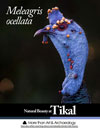 Meleagris_ocellata_occelated_turkey_Tikal_FLAAR_Report