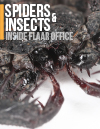 Minititle-insects-spiders-tailless-whip-scorpions-inside_FLAAR_office-Nicholas-Hellmuth