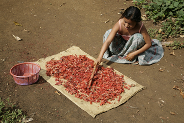 Achiote Girl