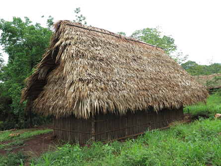 Corozo-palm-thatch-mayan-house-architecture-image