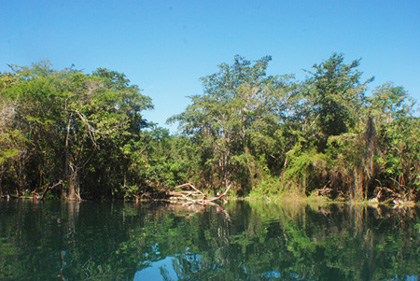 Tigre area of Peten, Las Guacamayas Biological Station