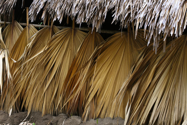 Palm-tree-thatch-Canal-de-Chiquimulilla-Oct-12-9902
