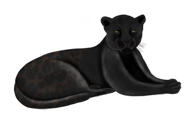 black jaguar panther illustration update jaguar pattern flaar image JS