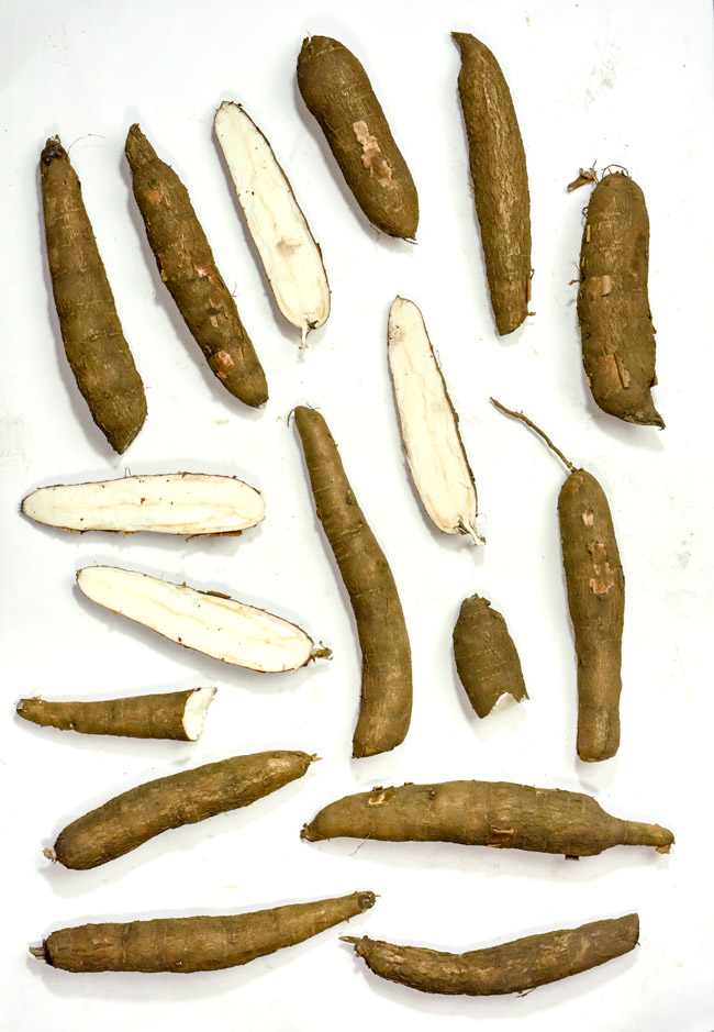 root crops Yuca Camote Manioc Westcott Aug 14 2017 NH